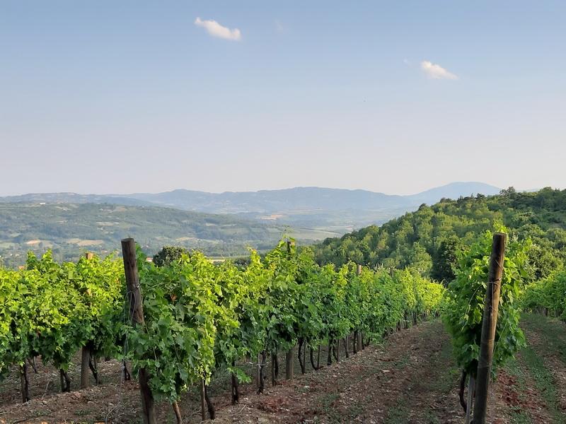 Vinogradi Topola