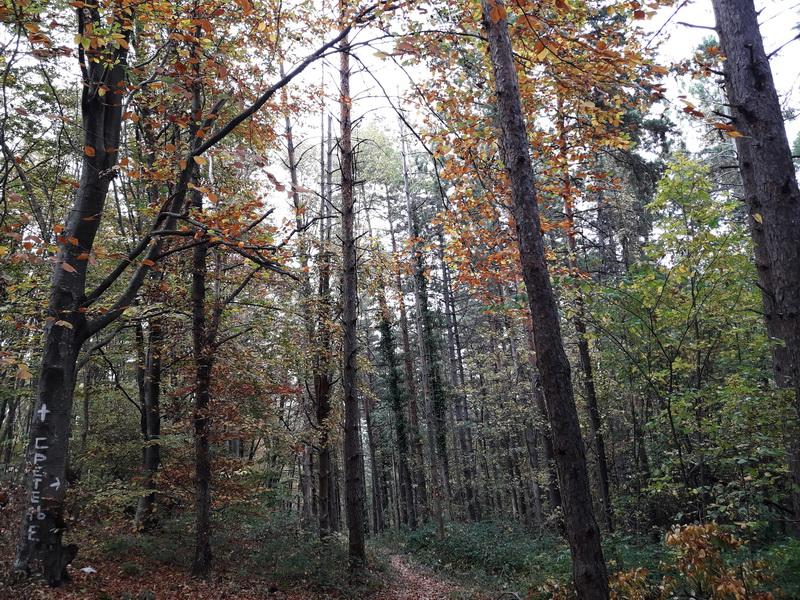 Ovčar šuma