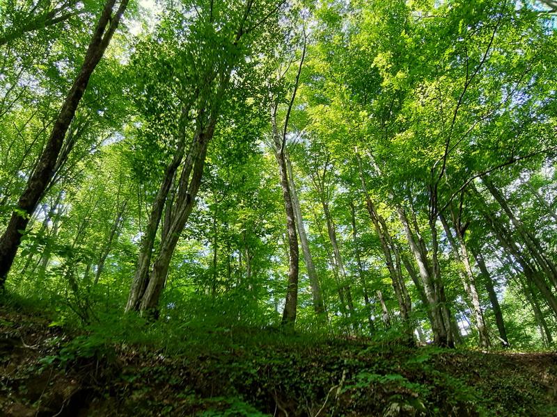 Šuma u kanjonu Nere