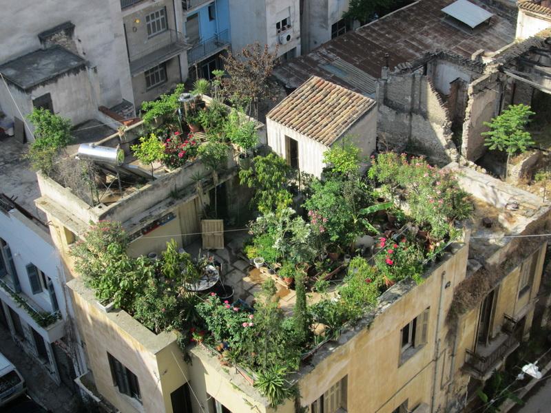 Bašta na krovu