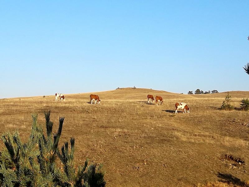 Pejzaž sa Zlatibora